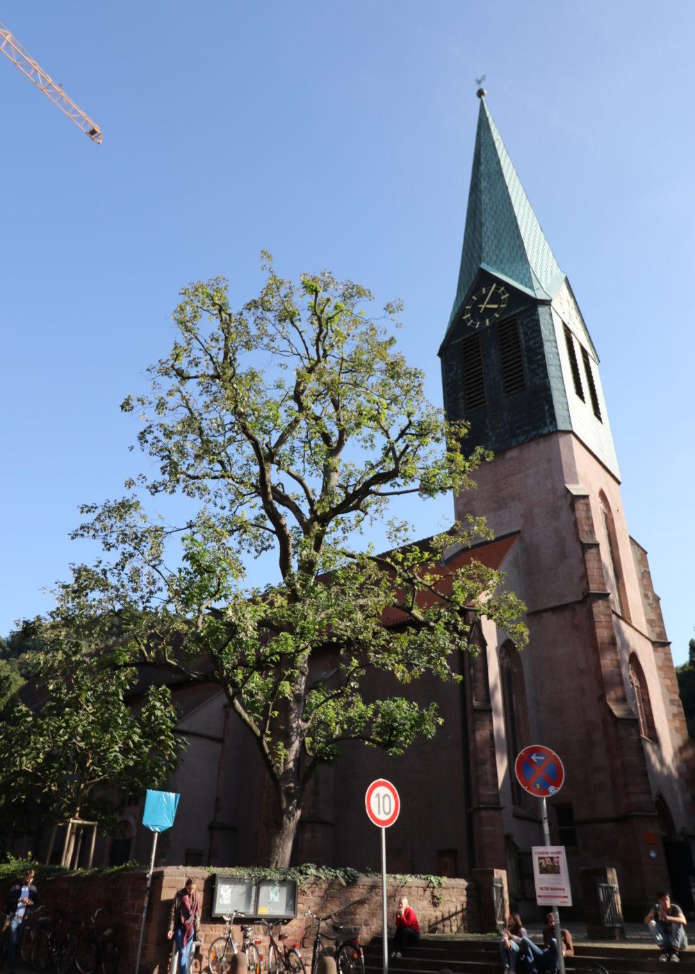 Baum vor einem Kirchturm