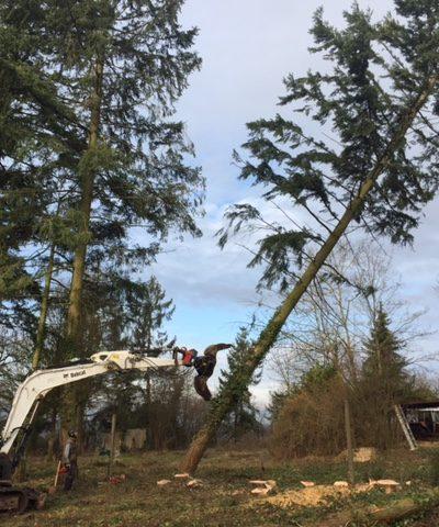Minibagger mit Kreifarm fällt einen Baum