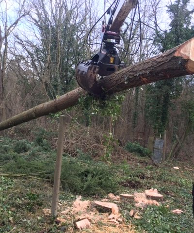 Baggerschaufel greift einen Baumstamm