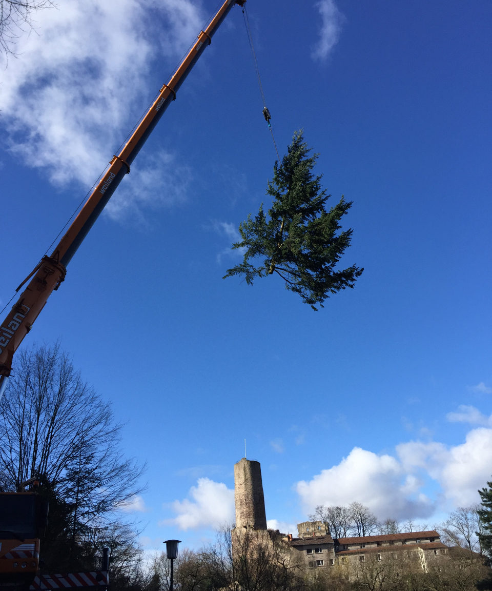 Kran hieft einen kompletten Baum nach oben