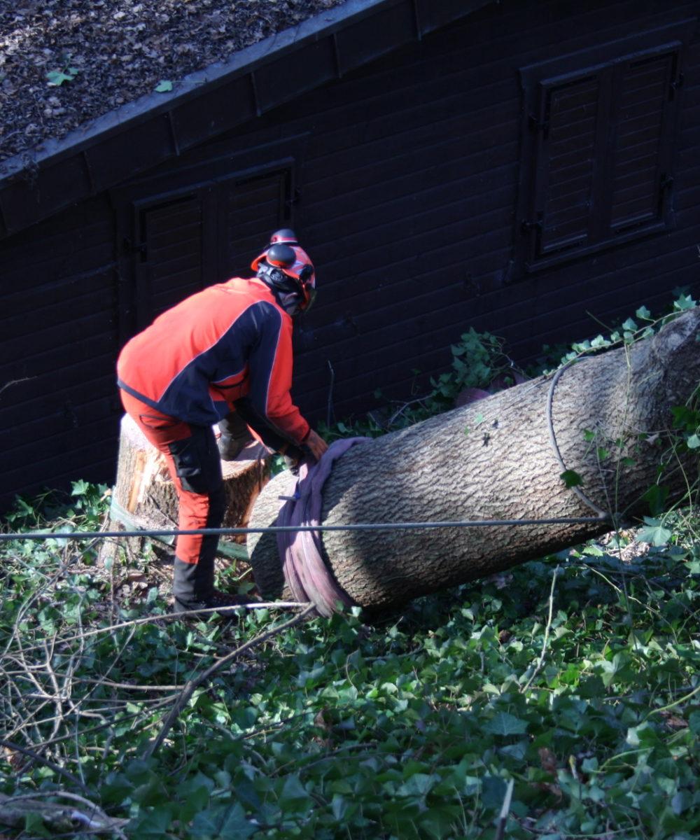 Baumstumpf wird mit Hilfe eines Stahlseils abgetragen