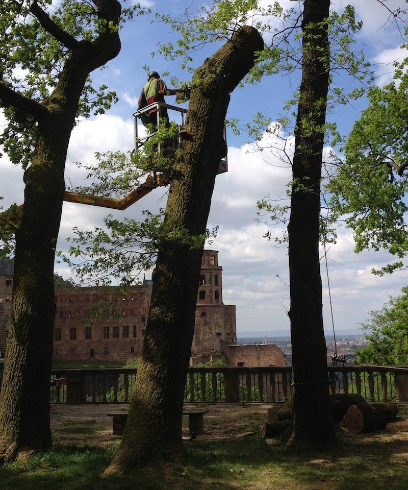 Forstarbeit mit Hebebuehne im Hintergrund das Heidelberger Schloss