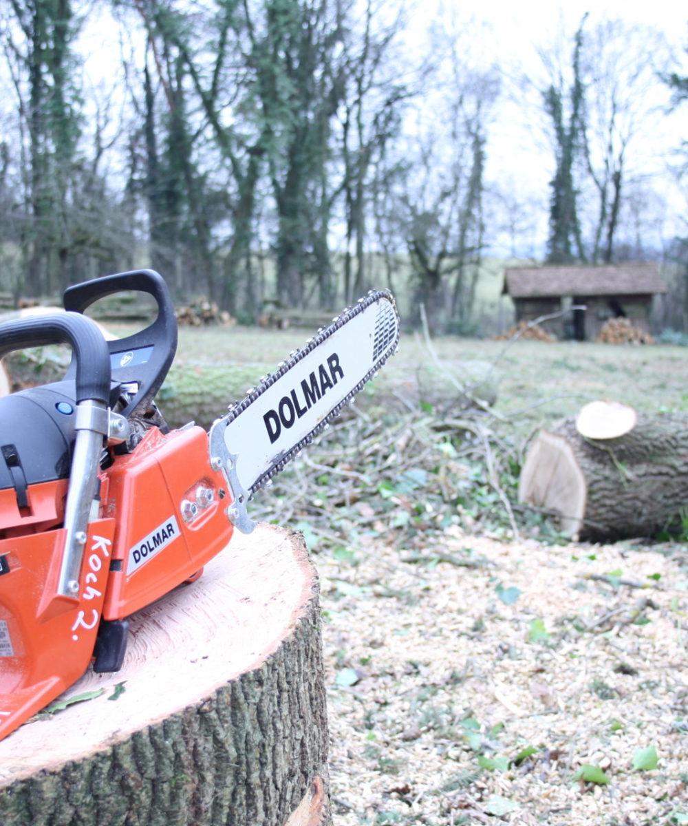 Kettensäge auf Baumstumpf